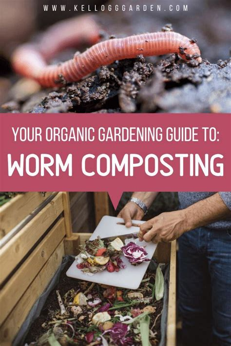 Worm composting for beginners #composting #beginners