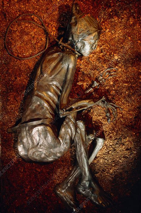 The mummified well-preserved body of Tollund Man - Stock