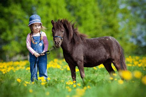 American Miniature Horse Registry To Hold 25th Anniversary